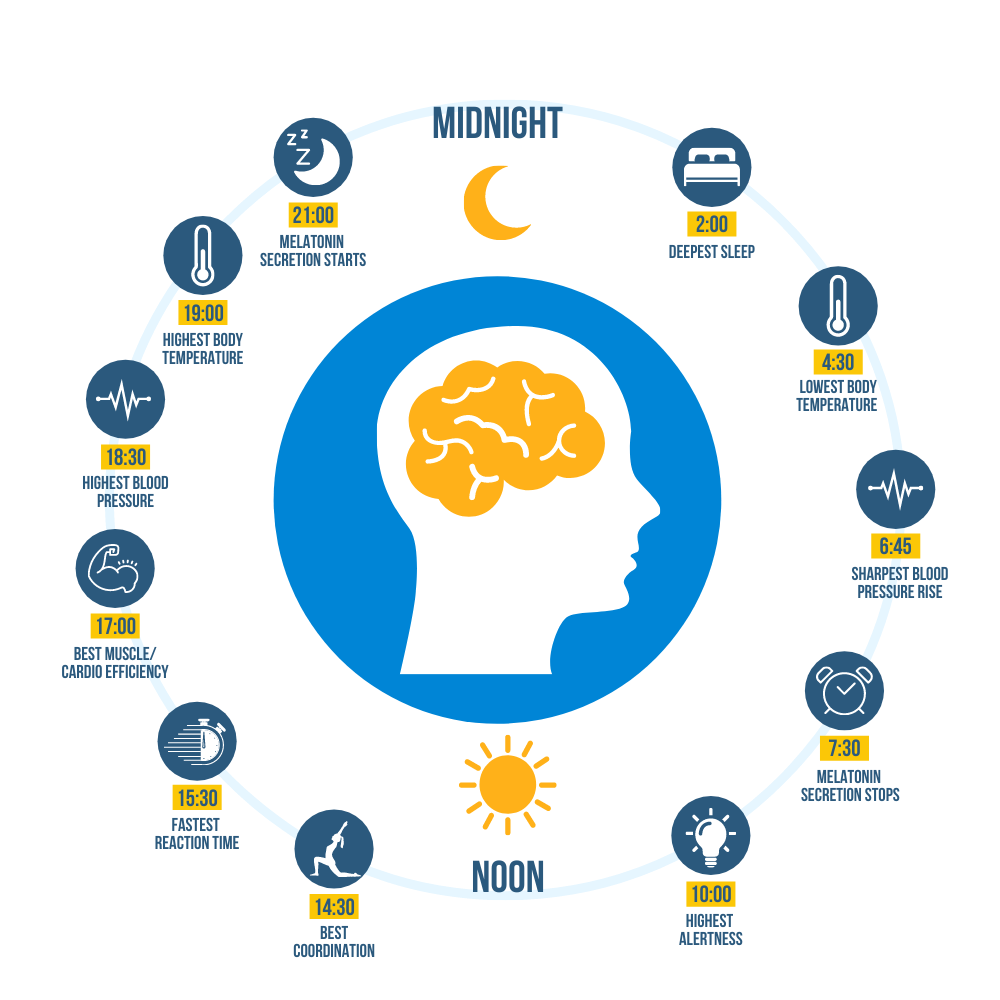 An image depicting the phases of your sleep/wake cycle